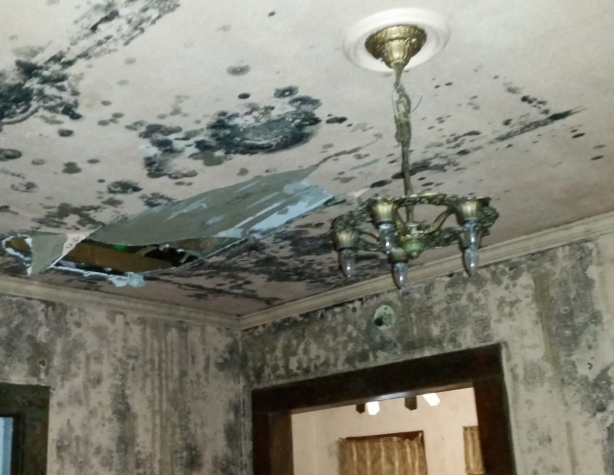 what does toxic black mold look like everything you need to know mold inspection illinoismold. Black Bedroom Furniture Sets. Home Design Ideas